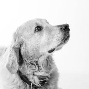 Hund Timber - schaut nach oben