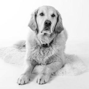 Hund Timber - liegend