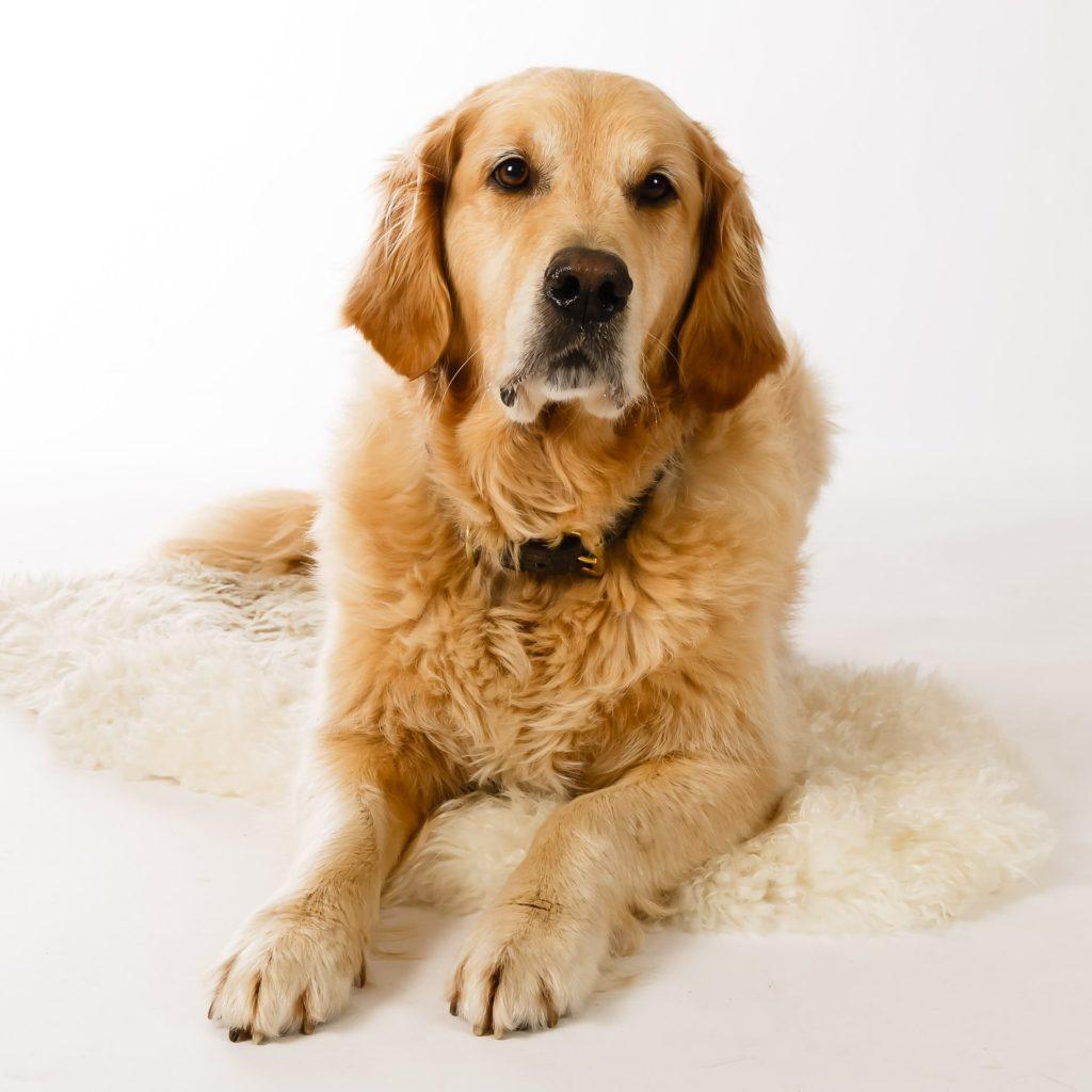 Hund Timber