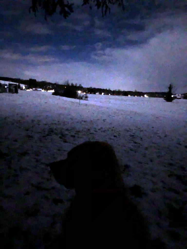 Hund Timber lauscht in die Nacht