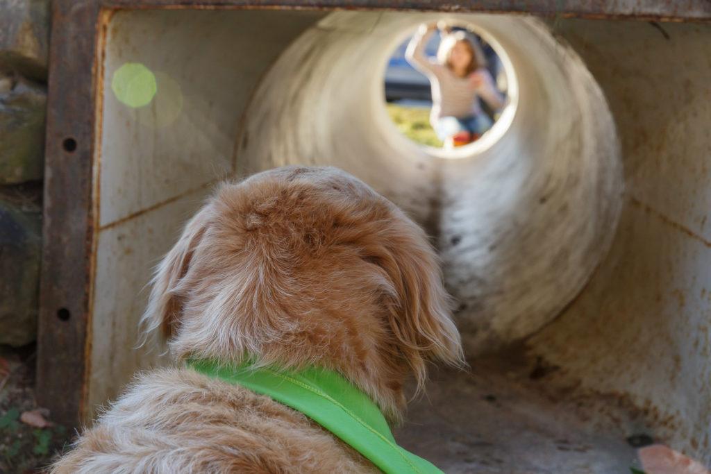 Hund Timber schaut in die Röhre