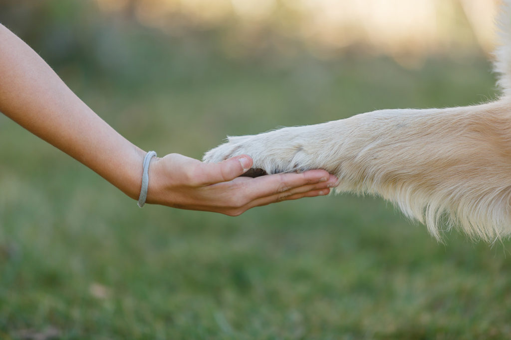 Kinderhand hält Hundepfote