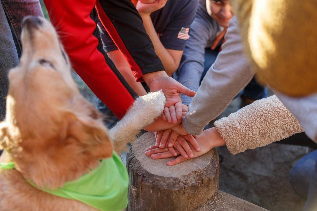 Hund Timber legt seine Pfote auf die Kinderhände