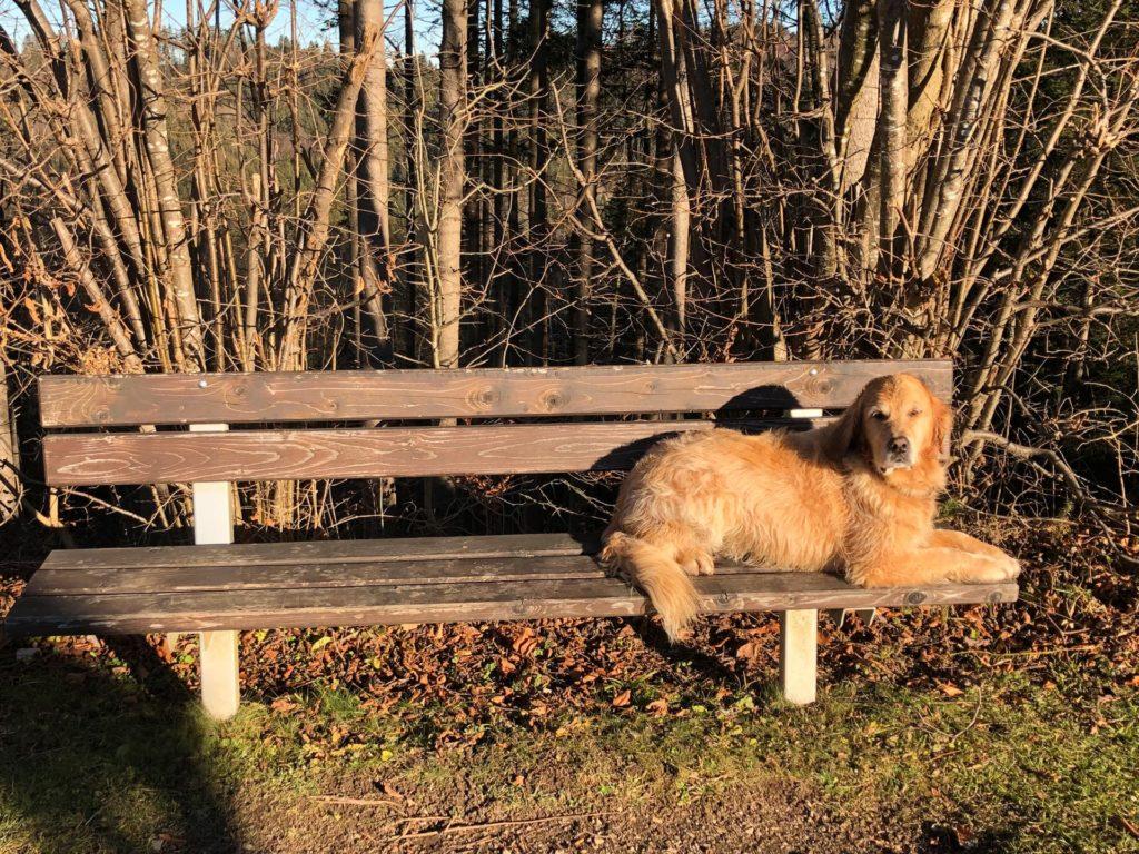 Hund Timber liegt auf der Bank - allein