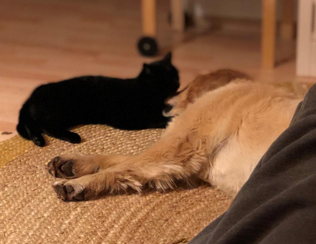 Hund Timber und Katze Peppi
