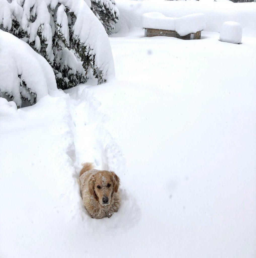 Timber im Schnee versunken