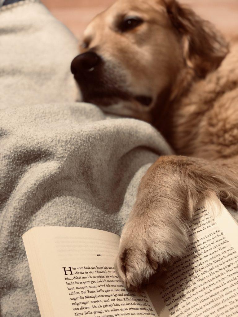 Mit Timber eingekuschelt ein Buch lesen