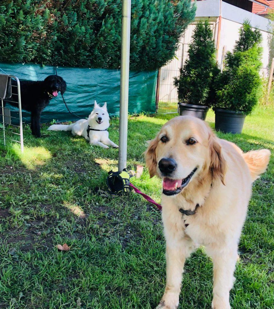 Timber mit Hundefreunde Yari und Emily