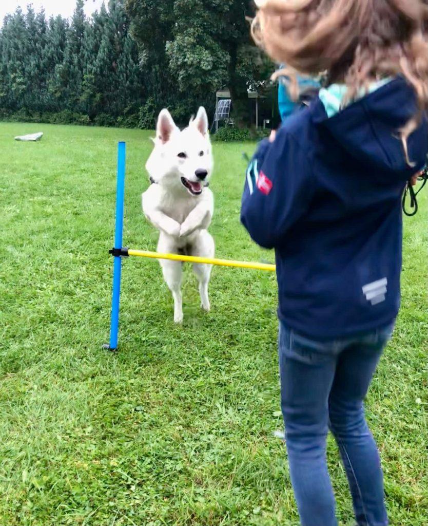 Hund Yari springt über die Hürden