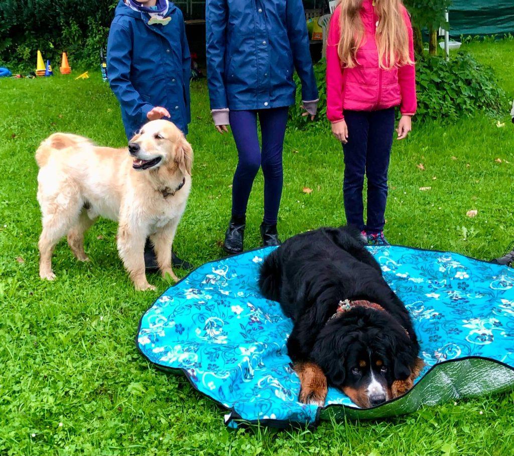 Hunde und Kinder zusamme