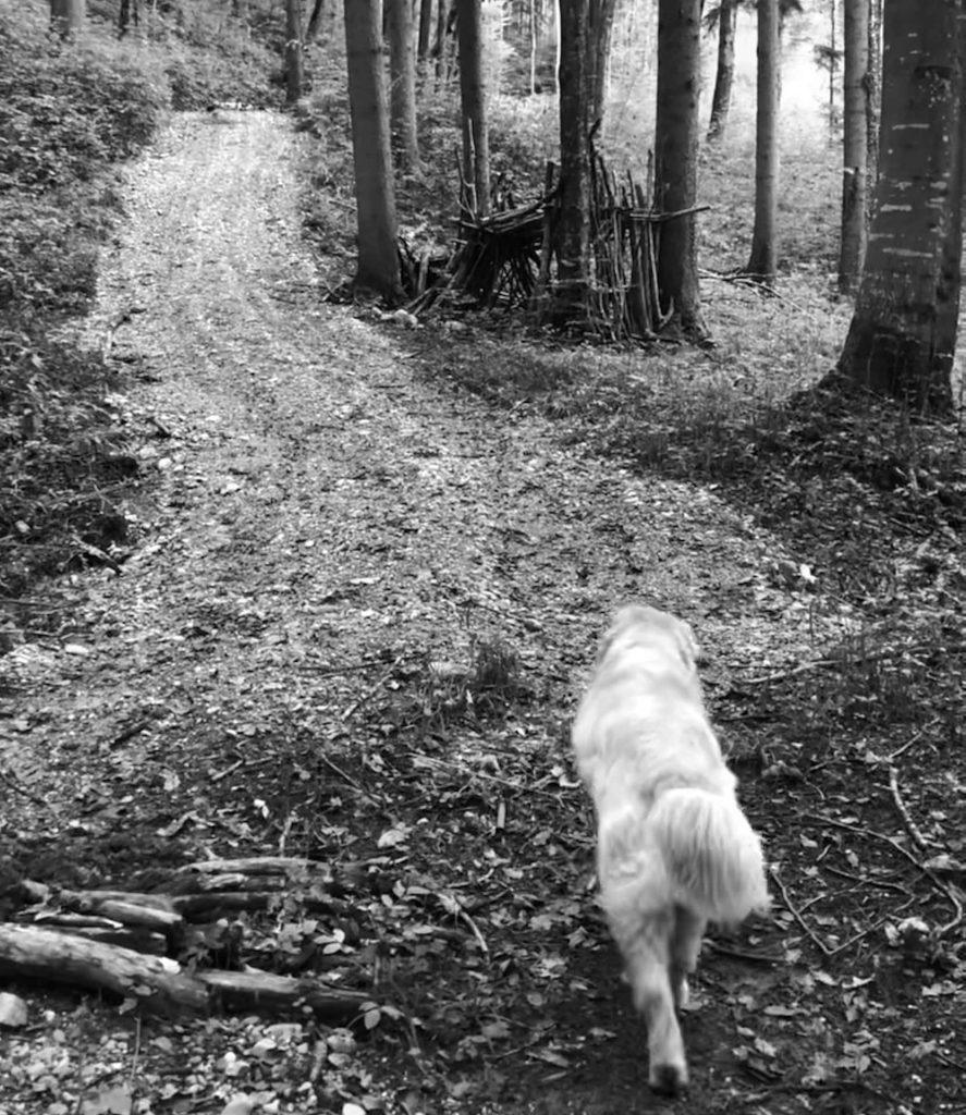Hund Timber im Wald spazieren