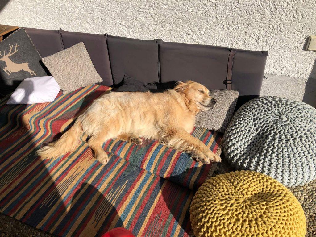 Timber liegt in seiner Hundelounge in der Sonne